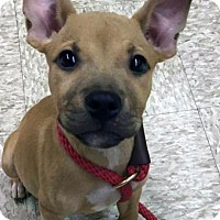 Adopt A Pet :: Parker - Cary, IL