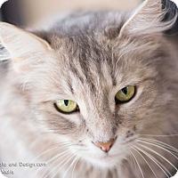 Adopt A Pet :: Uharra - Fountain Hills, AZ