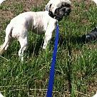 Adopt A Pet :: Gloria Jean