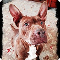 Adopt A Pet :: Cocoa - Franklinville, NJ