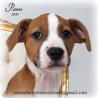 Adopt A Pet :: Pam - New Orleans, LA