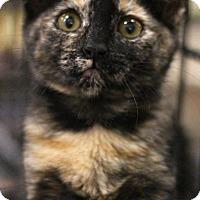 Adopt A Pet :: Little Miss - Sacramento, CA