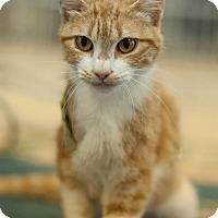 Adopt A Pet :: Kayla - Salisbury, NC