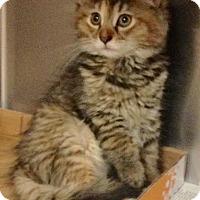 Adopt A Pet :: Fluffy - East Brunswick, NJ