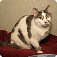 Adopt A Pet :: Gigi and Glitz - Milford, MA
