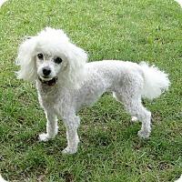Adopt A Pet :: Sissy - Walnut Creek, CA
