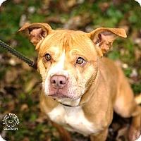 Adopt A Pet :: Jodi - RESCUED! - Zanesville, OH