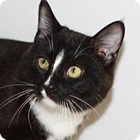 Adopt A Pet :: Fermium - Colorado Springs, CO