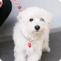 Adopt A Pet :: Arnold - Los Angeles, CA