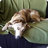 Adopt A Pet :: Hailey - Arlington, VA