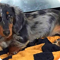 Adopt A Pet :: Charlie - Andalusia, PA