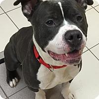 Adopt A Pet :: Oscar - Wauwatosa, WI