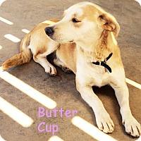 Adopt A Pet :: Butter Cup - Poway, CA