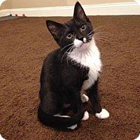 Adopt A Pet :: Chiclet - Apex, NC
