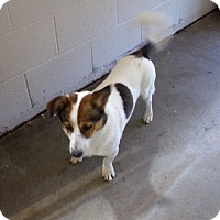 Labrador Retriever Mix Dog for adoption in Osceola, Arkansas - JOHN BOY