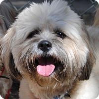 Adopt A Pet :: Nuna - Philadelphia, PA