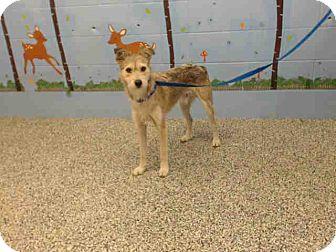 Terrier (Unknown Type, Medium) Mix Dog for adoption in San Bernardino, California - URGENT on 10/11 SAN BERNARDINO
