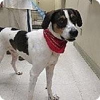 Adopt A Pet :: Marley-LOCAL - Lebanon, ME