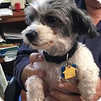 Adopt A Pet :: Sandy - Nuevo, CA