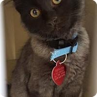 Adopt A Pet :: Anton - Fresno, CA