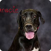 Adopt A Pet :: Gracie - Somerset, PA