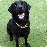 Adopt A Pet :: Khole - Buckeystown, MD