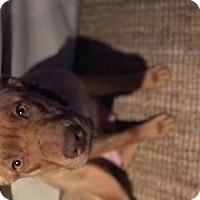 Adopt A Pet :: Nala - Custer, WA