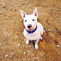 Adopt A Pet :: Dee - Acushnet, MA