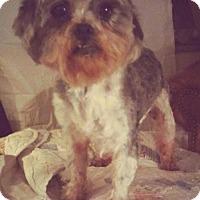 Adopt A Pet :: Wyatt - Fort Wayne, IN