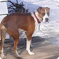Adopt A Pet :: Blitz - Toledo, OH