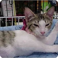 Adopt A Pet :: Taffy - The Colony, TX