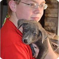 Adopt A Pet :: Coy - Douglasville, GA