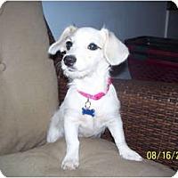 Adopt A Pet :: Sherry - Andrews, TX