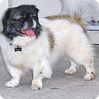 Adopt A Pet :: Biscuit - Orange Park, FL