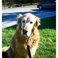 Adopt A Pet :: Macy - Foster, RI