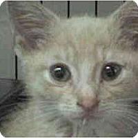 Adopt A Pet :: Parkway - Island Park, NY