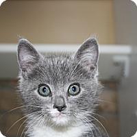 Adopt A Pet :: Aretha - Armuchee, GA