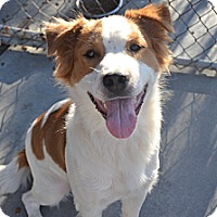 Adopt A Pet :: Timber - Perris, CA