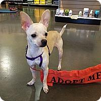 Adopt A Pet :: Cleo (Cleopatra) - Gig Harbor, WA