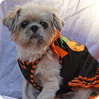 Adopt A Pet :: Mulan - Virginia Beach, VA