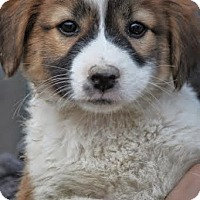 Adopt A Pet :: *Tammy - PENDING - Westport, CT