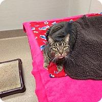 Adopt A Pet :: Copan - Gilbert, AZ