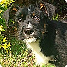 Adopt A Pet :: Hudson