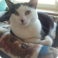 Adopt A Pet :: TIGGER - Lincoln, NE