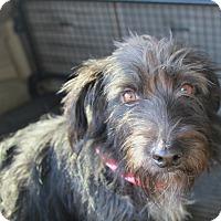 Adopt A Pet :: Cadbury - Norwalk, CT