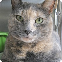 Adopt A Pet :: Gracie - North Kingstown, RI