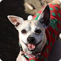 Adopt A Pet :: Roo - Creston, CA