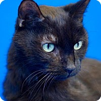 Adopt A Pet :: Taylor - Madison, WI