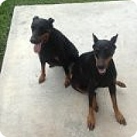 Adopt A Pet :: Flora and Sienna - Coral Springs, FL