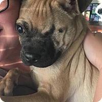 Adopt A Pet :: Richie - Joliet, IL